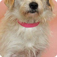 Adopt A Pet :: Fanny - Waldorf, MD