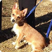 Adopt A Pet :: Slicker - Bloomfield, CT