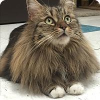 Adopt A Pet :: MEE MEE - Brea, CA