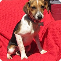 Adopt A Pet :: Dale - Oakland, AR