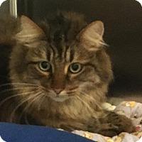 Adopt A Pet :: Chloe - Columbia, SC