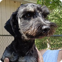 Adopt A Pet :: charlie - Crump, TN