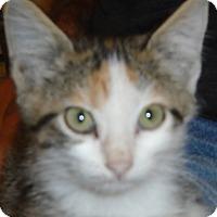 Adopt A Pet :: Puppy - Georgetown, TX