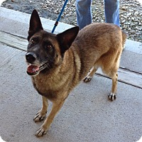 German Shepherd Dog Mix Dog for adoption in Minneapolis, Minnesota - Ramona