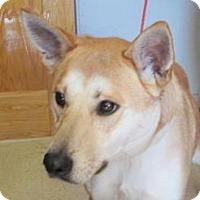 Adopt A Pet :: Chloe - Ashtabula, OH