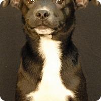 Adopt A Pet :: Casper - Newland, NC
