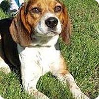 Adopt A Pet :: Zeke - Transfer, PA
