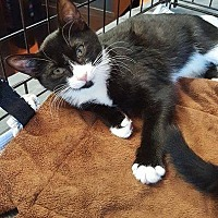 Adopt A Pet :: Dory - North Haledon, NJ