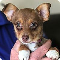 Adopt A Pet :: Pixie - Pacific Grove, CA