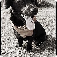 Adopt A Pet :: Max - Converse, TX