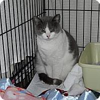 Adopt A Pet :: Link - Stafford, VA