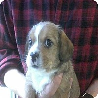 Adopt A Pet :: Mitch - Hop Bottom, PA