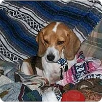 Adopt A Pet :: Smooch - Portland, OR