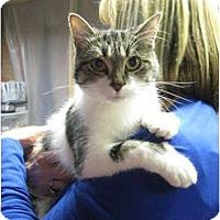 Adopt A Pet :: Emmie - Centerburg, OH