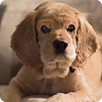 Adopt A Pet :: Jack - Orange, CA