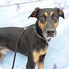 Adopt A Pet :: Sirius