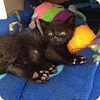 Adopt A Pet :: Ben - Island Park, NY