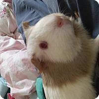 Adopt A Pet :: Poppy - Fullerton, CA