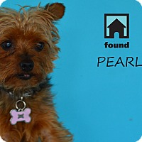 Adopt A Pet :: Pearl - Chicago, IL