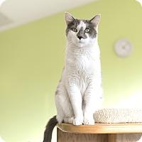 Adopt A Pet :: Speedy - Chicago, IL