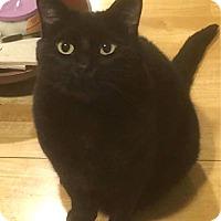 Adopt A Pet :: Erebus - Oakland, CA