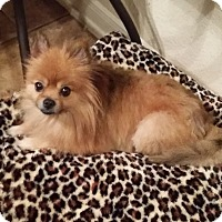 Adopt A Pet :: Reeses - conroe, TX