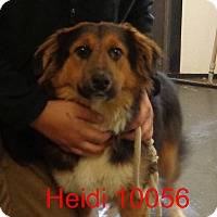 Adopt A Pet :: Heidi - baltimore, MD