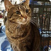 Adopt A Pet :: Lily Mae - Trevose, PA