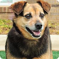 Adopt A Pet :: Archimedes - Lincolnton, NC