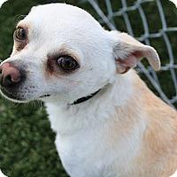 Adopt A Pet :: Sonny - Chula Vista, CA