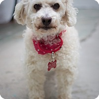 Adopt A Pet :: Crystalline - Los Angeles, CA