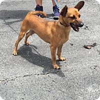 Adopt A Pet :: Bonk - Jupiter, FL