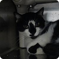 Adopt A Pet :: Bahama Mama - Elyria, OH