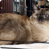Adopt A Pet :: Mali - Potomac, MD