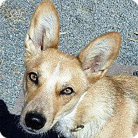 Adopt A Pet :: Daisy Rogue - Oakley, CA