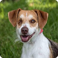 Adopt A Pet :: ARTHUR - West Palm Beach, FL