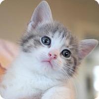 Adopt A Pet :: Ukulele - Austin, TX