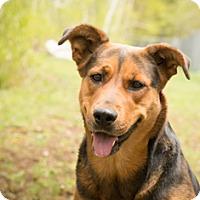Adopt A Pet :: Rhomii - Carlsbad Springs, ON