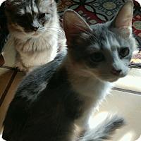 Adopt A Pet :: Laurel - Palatine, IL