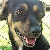 Adopt A Pet :: Wilma *MEET ME!* - Wakefield, RI