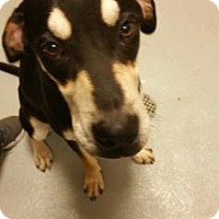 Adopt A Pet :: Landon - Cumming, GA