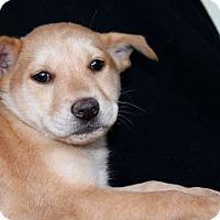 Adopt A Pet :: RC - Los Angeles, CA
