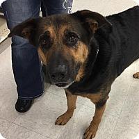 Adopt A Pet :: Bronzon - Rochester, MN