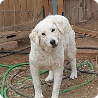 Adopt A Pet :: Sun - Phoenix, AZ