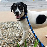 Adopt A Pet :: TARA - Terre Haute, IN