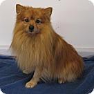 Adopt A Pet :: Jasper
