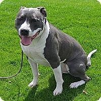 Adopt A Pet :: BO - Torrance, CA