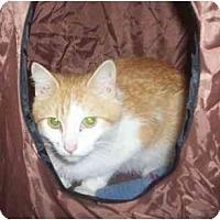 Adopt A Pet :: Sara - St. Louis, MO