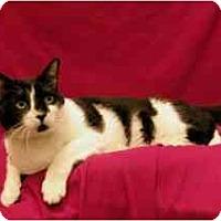 Adopt A Pet :: Junior - Sacramento, CA