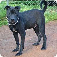 Adopt A Pet :: Cole - Athens, GA